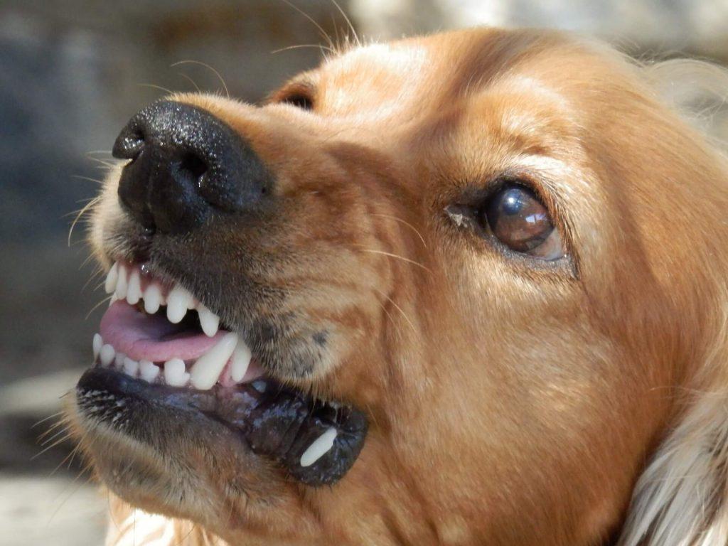 Agressieve hond