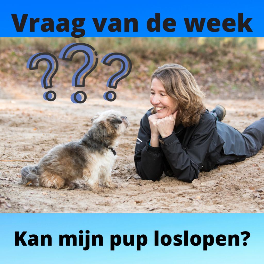 Kan mijn pup loslopen. Wanneer kan mijn pup loslopen. Puppycursus Almelo, Geesteren Hertme Wierden Borne Bornerbroek Oldenzaal