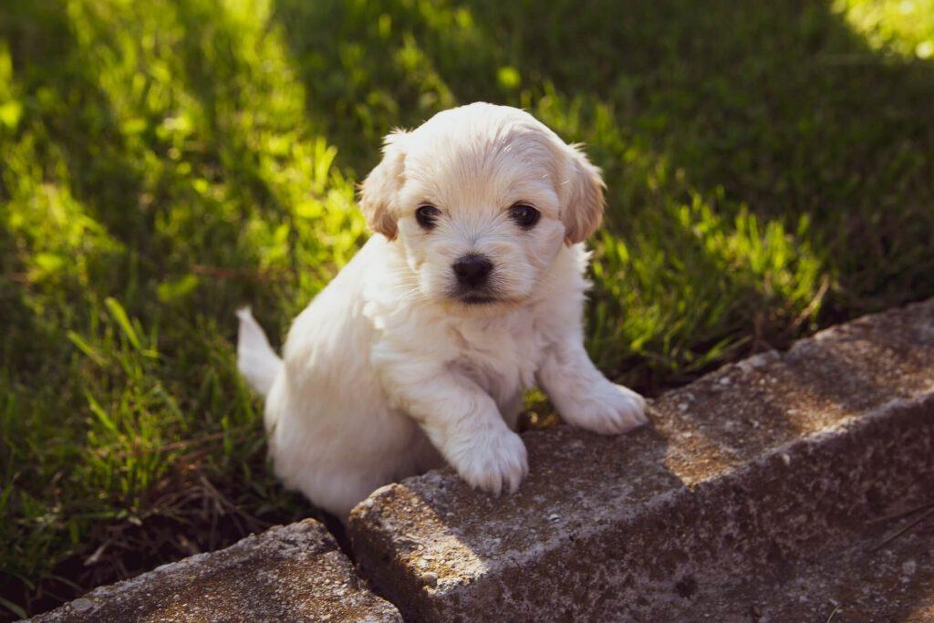 Puppycursus Almelo Wierden Enter Bornerbroek Borne Zenderen Geesteren Socialisatie pup niet trekken aan de lijn chanine wiertz privétraining pup hond en baby hond en kind loslopen pup