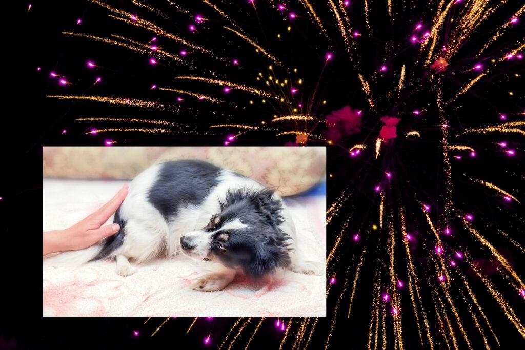 vuurwerkangst hond almelo geesteren borne bornerbroek zenderen enter wierden training hond aan huis privetraining hond en vuurwerk oud en nieuw enge knallen 2021